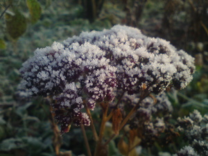 tuin_winter_DSC00413_300x225